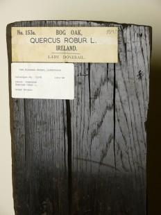 Bog oak, Ireland