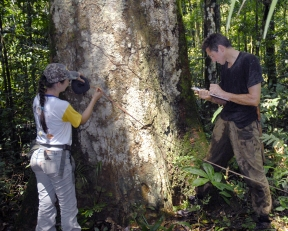 kew-image-1a-forest-survey-in-mato-grosso-photo-credit-william-milliken